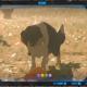 【ブレスオブザワイルド】犬のここほれワンワンイベント!エサを与えて懐かせよう!